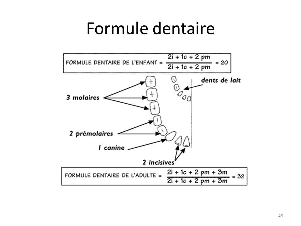 Formule dentaire 48