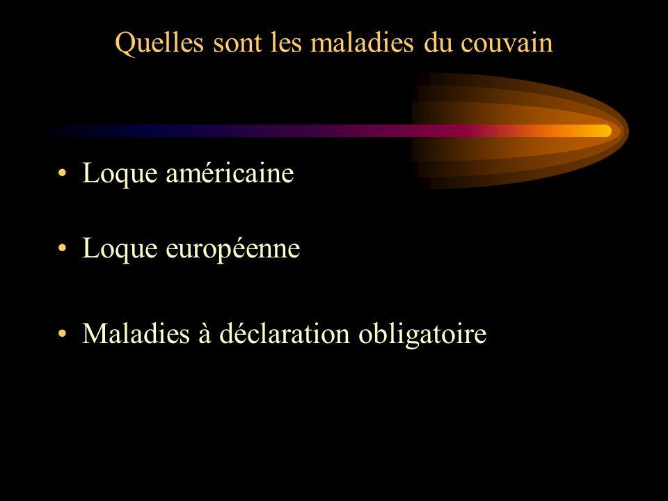 Quelles sont les maladies du couvain Loque américaine Loque européenne Maladies à déclaration obligatoire