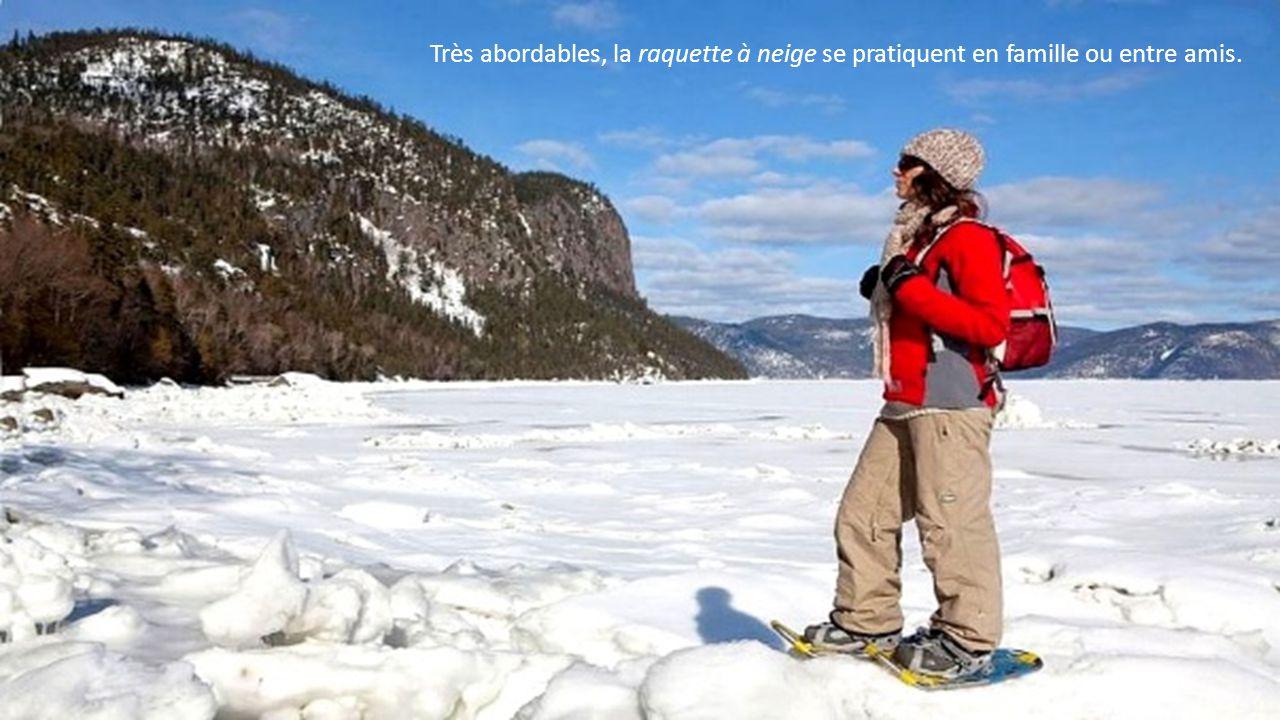 Douze espèces qui visitent le Saint-Laurent de façon saisonnière et la seule espèce qui y réside toute l année, le béluga.