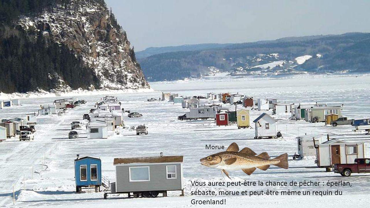 Reconnu pour sa grande diversité d'espèces, le fjord du Saguenay attire des milliers de pêcheurs en hiver.