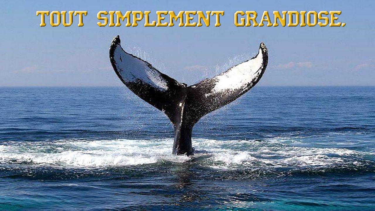 il existe de nombreux petits coins secrets d où vous pouvez voir, avec ou sans jumelles, ces fabuleuses baleines.
