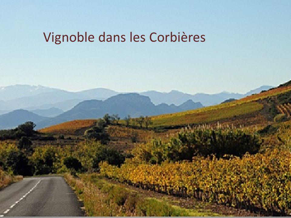 La vigne dans l'Aude