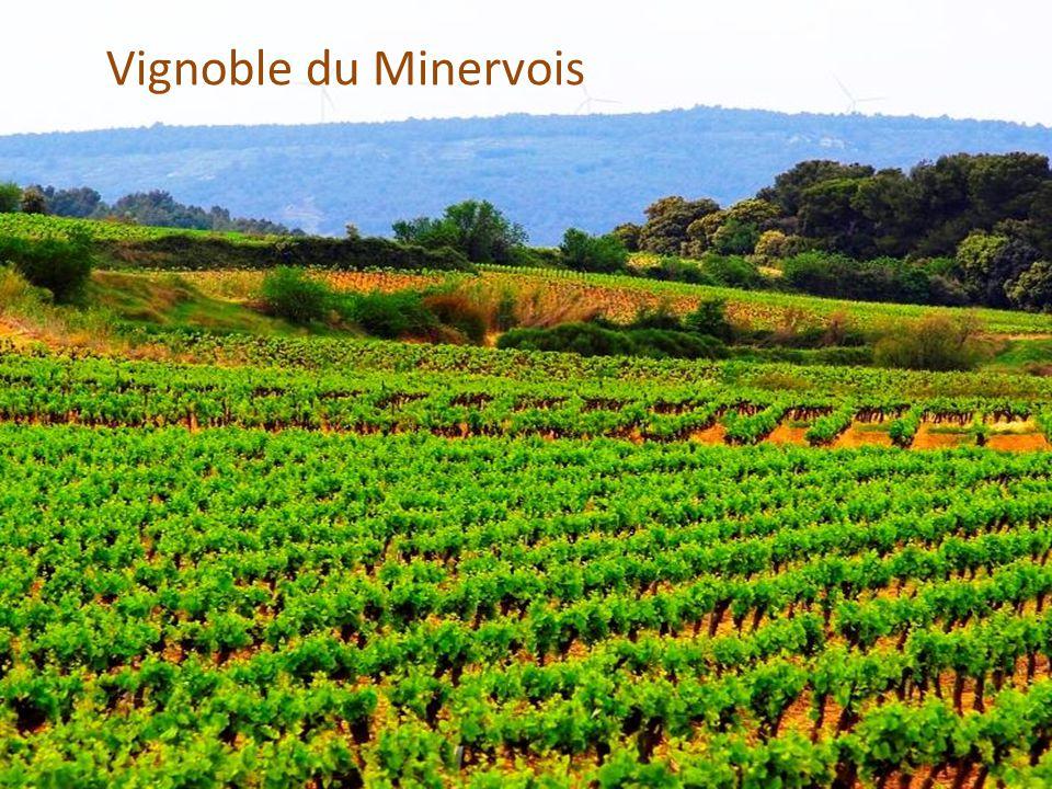 Vignoble dans les Corbières