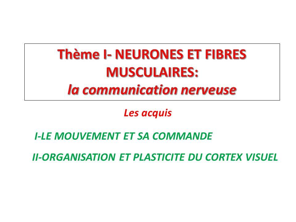 Les acquis II-ORGANISATION ET PLASTICITE DU CORTEX VISUEL I-LE MOUVEMENT ET SA COMMANDE