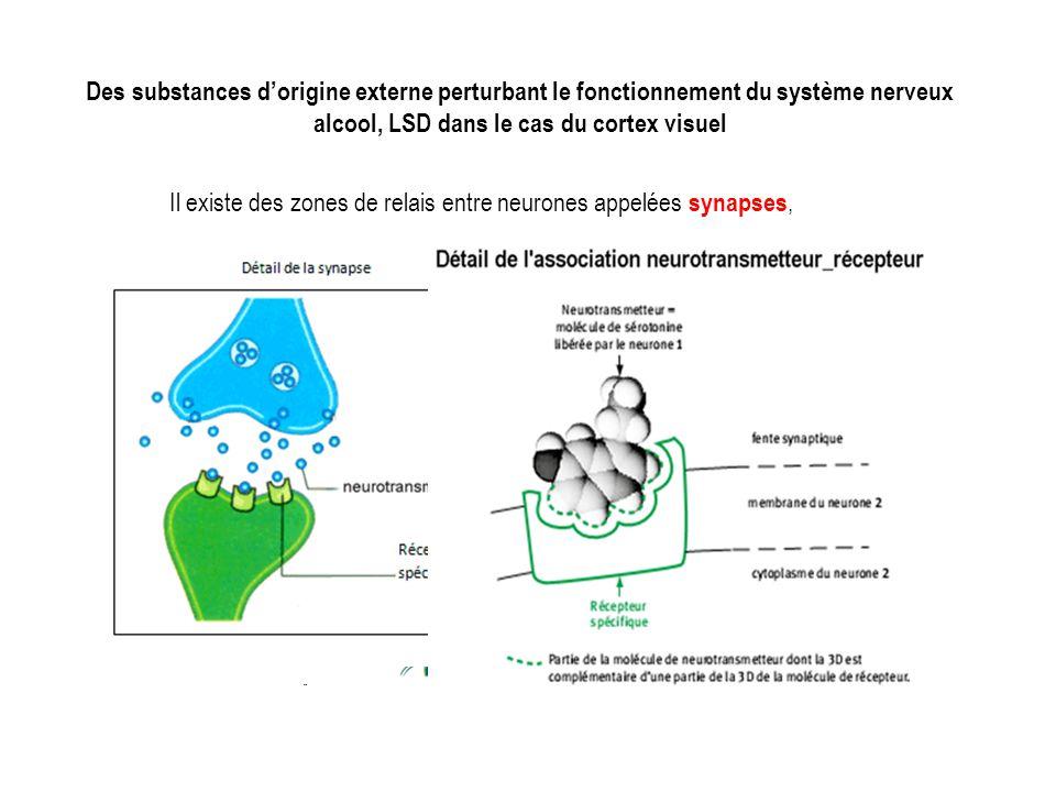 Des substances d'origine externe perturbant le fonctionnement du système nerveux alcool, LSD dans le cas du cortex visuel Il existe des zones de relais entre neurones appelées synapses,