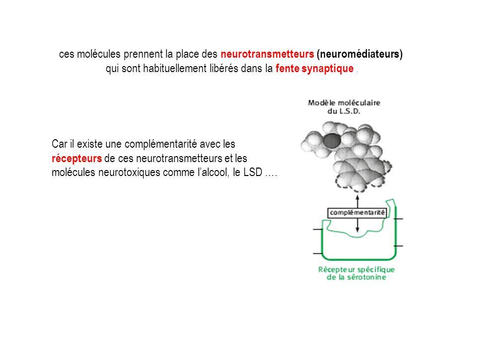 ces molécules prennent la place des neurotransmetteurs (neuromédiateurs) qui sont habituellement libérés dans la fente synaptique. Car il existe une c
