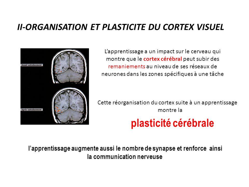 II-ORGANISATION ET PLASTICITE DU CORTEX VISUEL L'apprentissage a un impact sur le cerveau qui montre que le cortex cérébral peut subir des remaniement