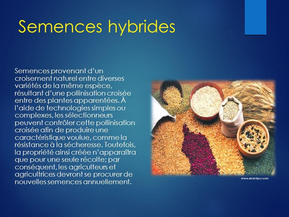 Semences hybrides Semences provenant d'un croisement naturel entre diverses variétés de la même espèce, résultant d'une pollinisation croisée entre des plantes apparentées.