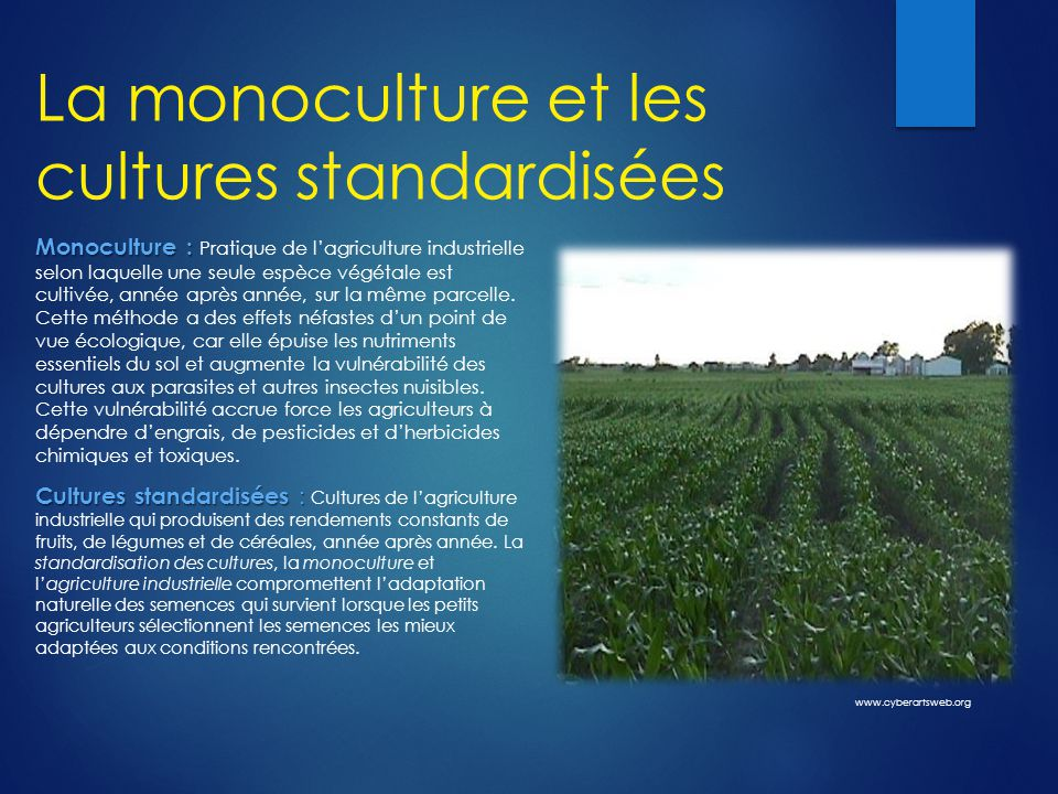 La monoculture et les cultures standardisées Monoculture : Monoculture : Pratique de l'agriculture industrielle selon laquelle une seule espèce végétale est cultivée, année après année, sur la même parcelle.