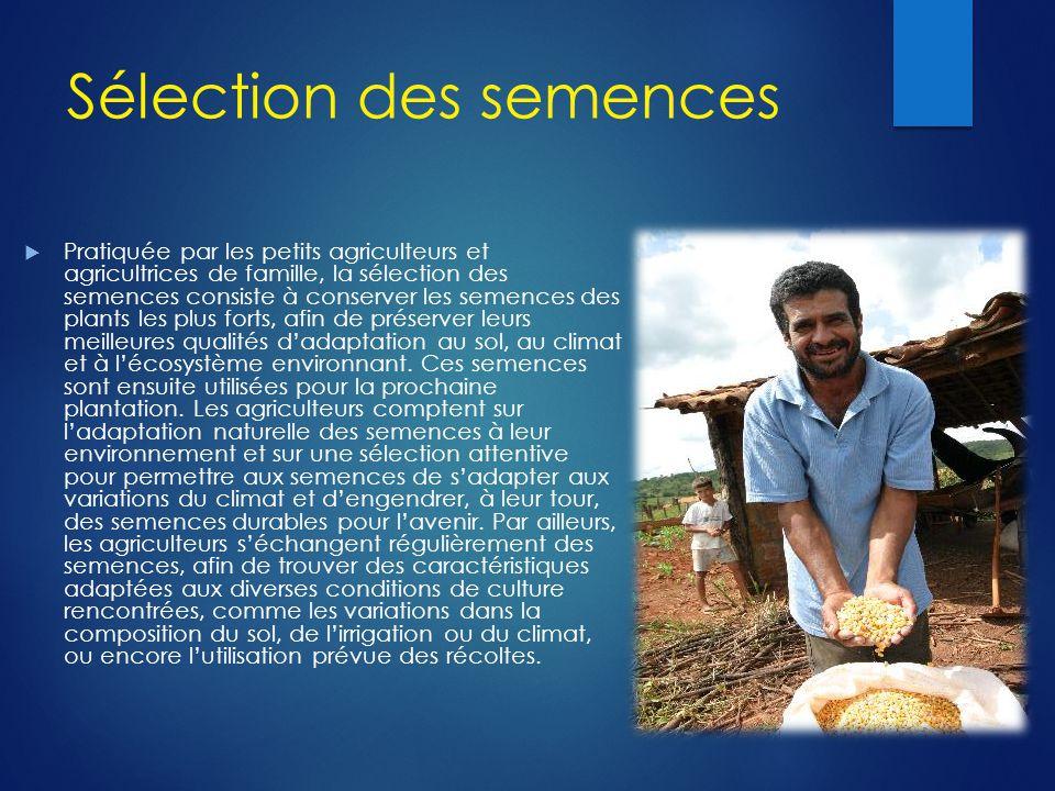 Sélection des semences  Pratiquée par les petits agriculteurs et agricultrices de famille, la sélection des semences consiste à conserver les semence