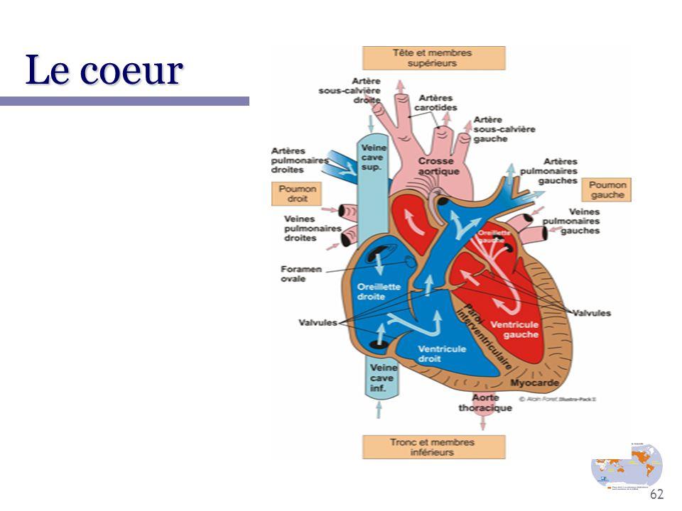 62 Le coeur