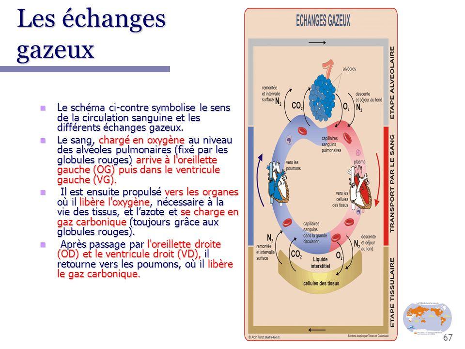 67 Les échanges gazeux Le schéma ci-contre symbolise le sens de la circulation sanguine et les différents échanges gazeux. Le schéma ci-contre symboli
