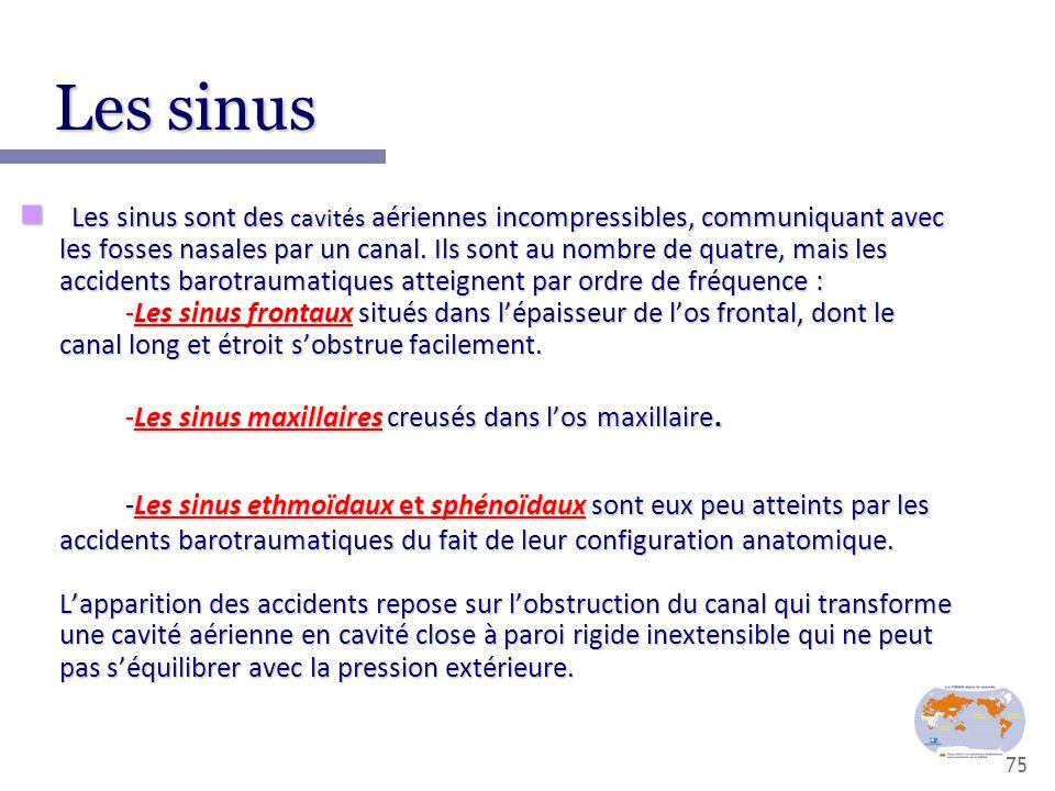 75 Les sinus Les sinus Les sinus sont des cavités aériennes incompressibles, communiquant avec les fosses nasales par un canal. Ils sont au nombre de