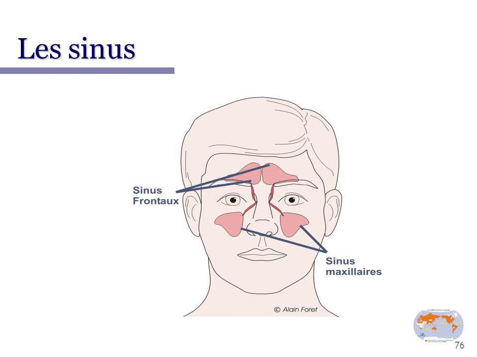 76 Les sinus