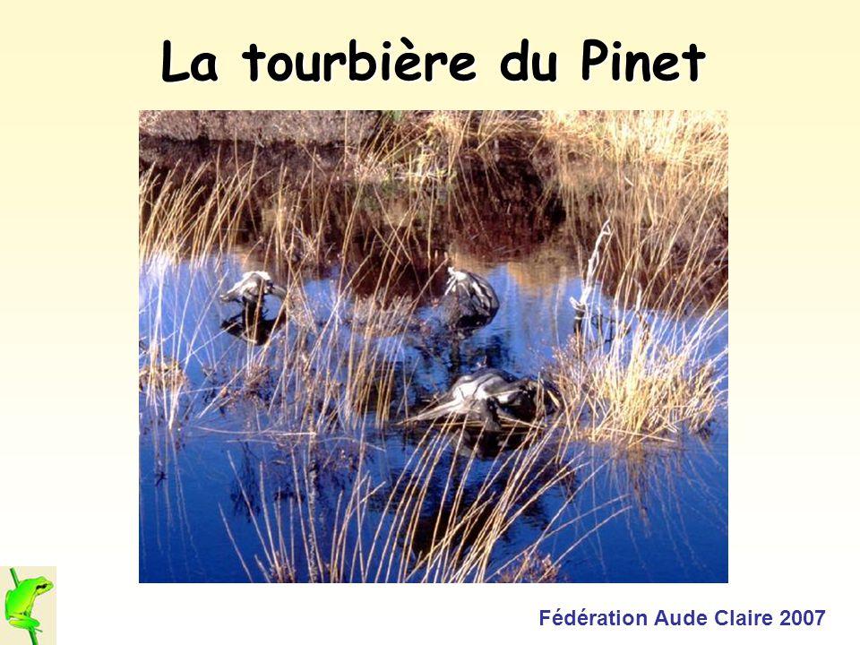 La tourbière du Pinet Fédération Aude Claire 2007