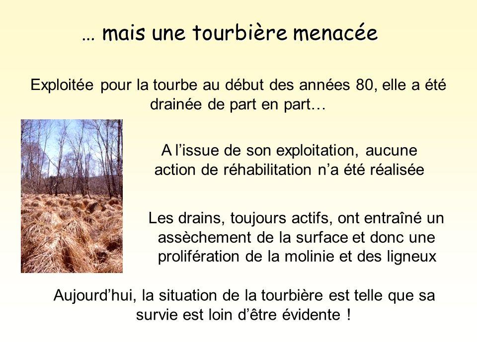 … mais une tourbière menacée Exploitée pour la tourbe au début des années 80, elle a été drainée de part en part… Aujourd'hui, la situation de la tour