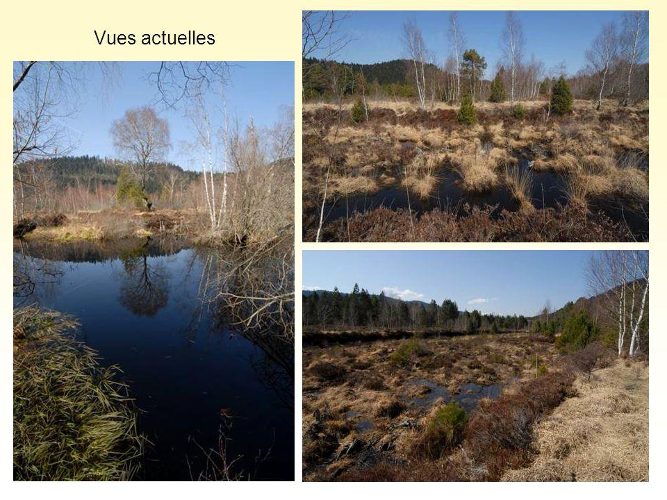 Vers une prise de conscience… Avec le soutien de partenaires locaux (Conseil Général de l'Aude, Communauté de communes, etc…), la fédération Aude Claire a lancé une réflexion sur la restauration de cette tourbière.
