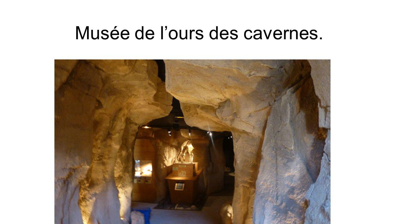 Musée de l'ours des cavernes.