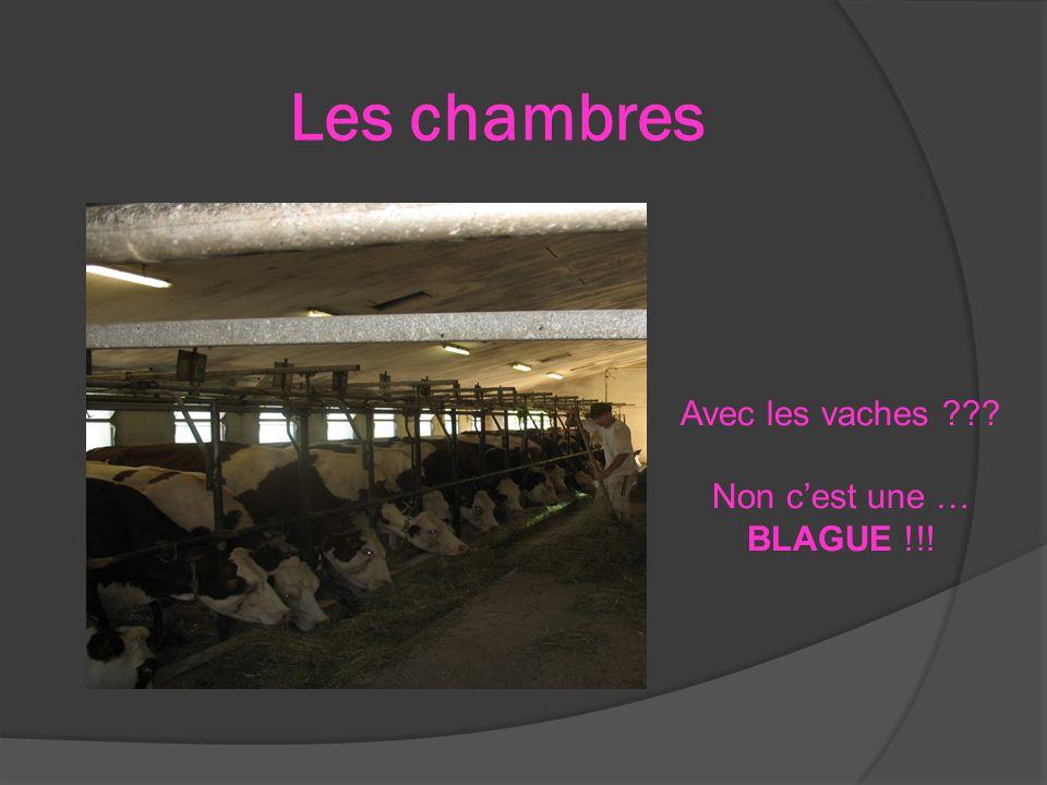 Les chambres Avec les vaches Non c'est une … BLAGUE !!!
