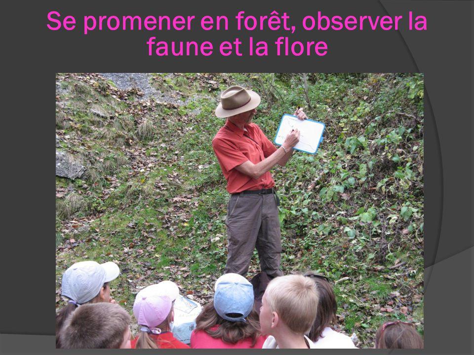 Se promener en forêt, observer la faune et la flore