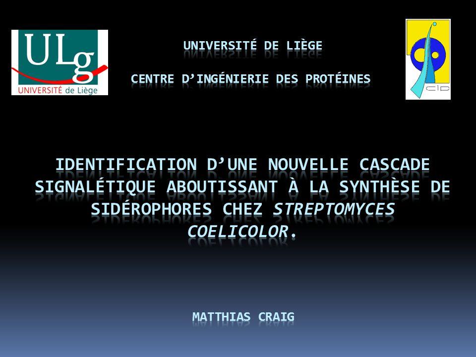 Résultats Cascade signalétique validée.GlcNAc réprime la biosynthèse des sidérophores.
