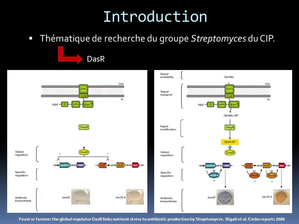 Introduction Objectif : Quels sont les métabolites dont la biosynthèse est DasR et/ou GlcNAc-dépendante .