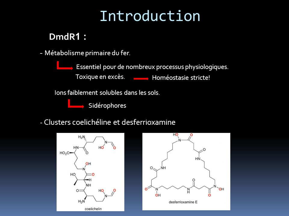 Introduction DmdR 1 : - Métabolisme primaire du fer.