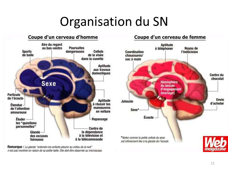 Organisation du SN 11