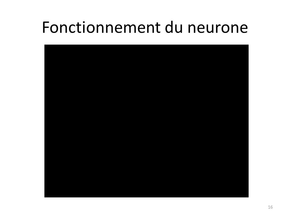 Fonctionnement du neurone 16