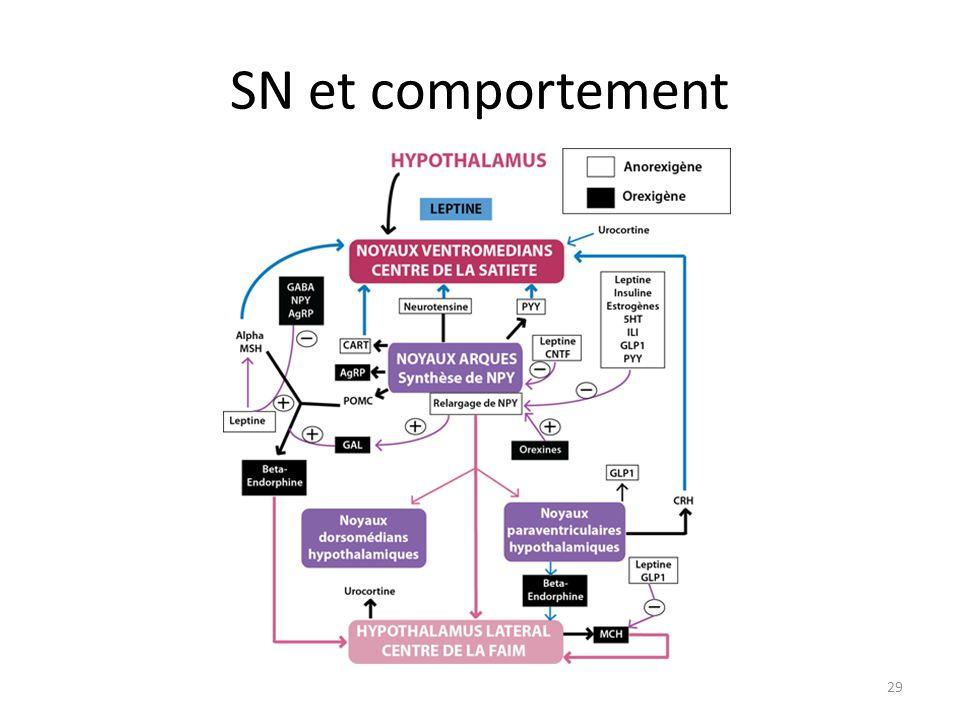 SN et comportement 29