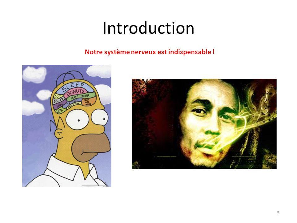 Introduction Notre système nerveux est indispensable ! 4