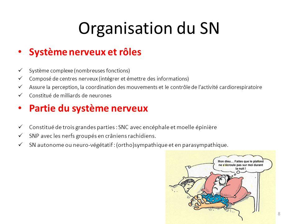 Organisation du SN Neurone et potentiel d'action Neurones (cellules nerveuses ): Répondre aux stimulus et les transformer en potentiels d'action.