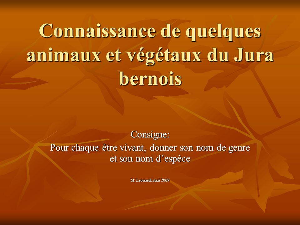 Connaissance de quelques animaux et végétaux du Jura bernois Consigne: Pour chaque être vivant, donner son nom de genre et son nom d'espèce M.