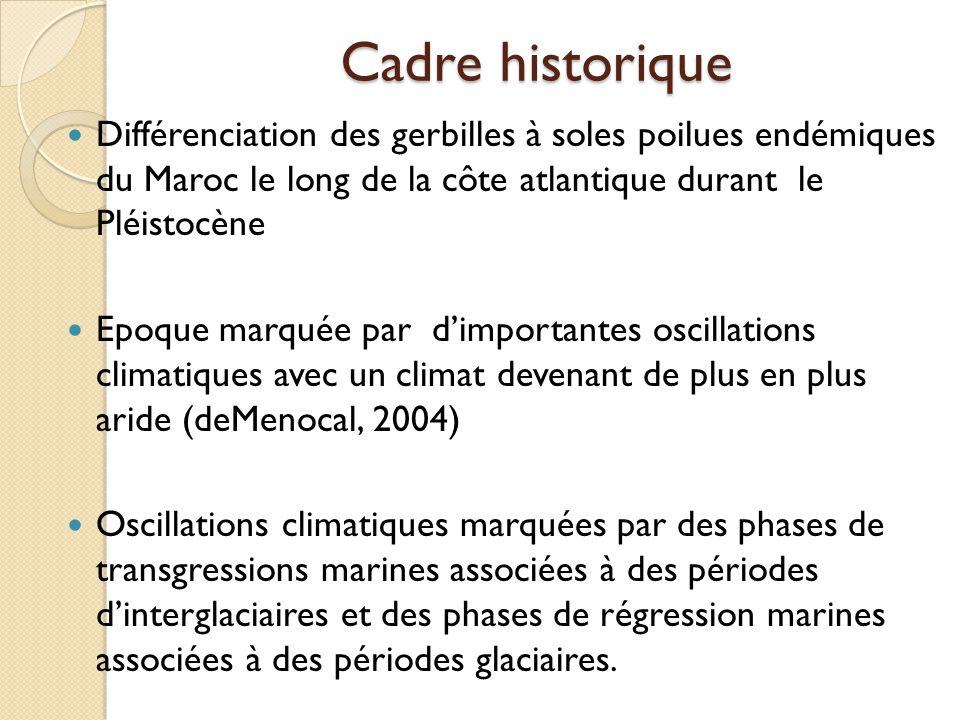 Cadre historique Différenciation des gerbilles à soles poilues endémiques du Maroc le long de la côte atlantique durant le Pléistocène Epoque marquée