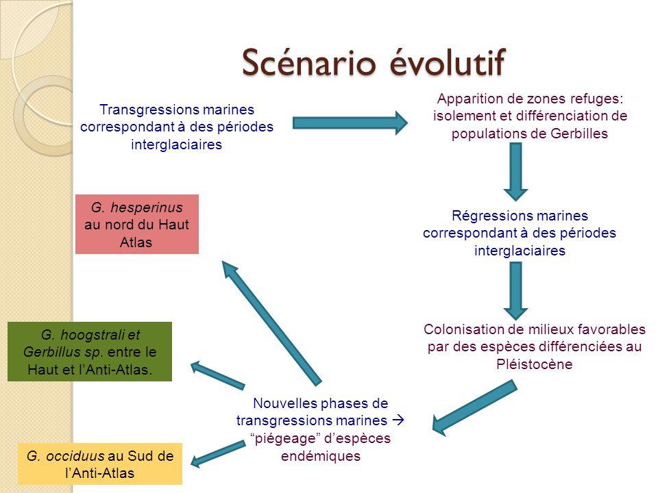 Scénario évolutif Transgressions marines correspondant à des périodes interglaciaires Apparition de zones refuges: isolement et différenciation de pop