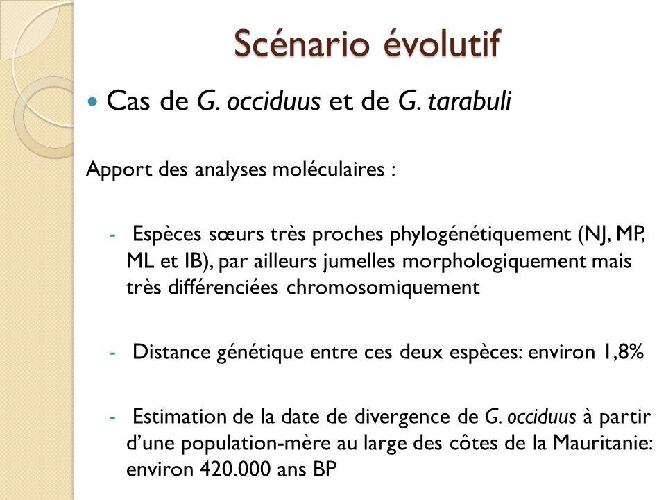 Cas de G. occiduus et de G. tarabuli Apport des analyses moléculaires : - Espèces sœurs très proches phylogénétiquement (NJ, MP, ML et IB), par ailleu