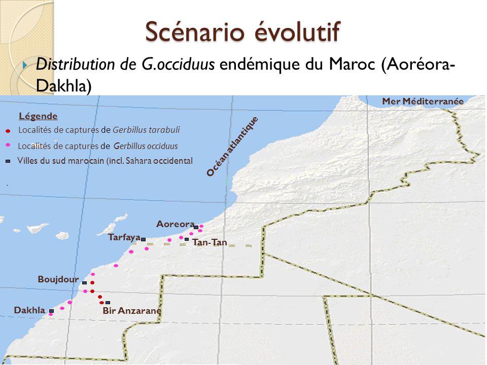  Distribution de G.occiduus endémique du Maroc (Aoréora- Dakhla) Tarfaya Aoreora Tan-Tan Dakhla Boujdour Bir Anzarane Mer Méditerranée Océan atlantiq
