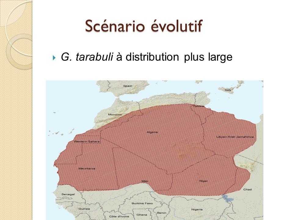  G. tarabuli à distribution plus large Scénario évolutif