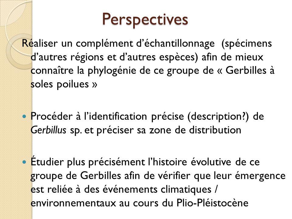 Perspectives Réaliser un complément d'échantillonnage (spécimens d'autres régions et d'autres espèces) afin de mieux connaître la phylogénie de ce gro