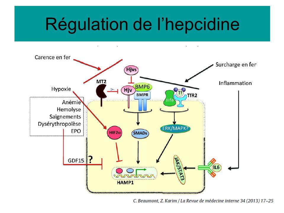 Régulation de l'hepcidine