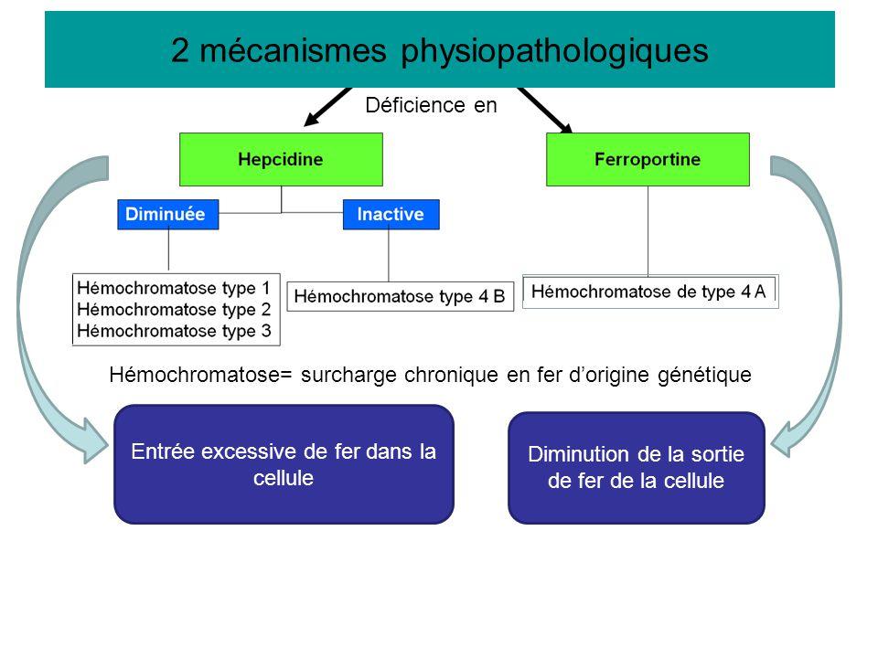 2 mécanismes physiopathologiques Entrée excessive de fer dans la cellule Diminution de la sortie de fer de la cellule 2 mécanismes physiopathologiques