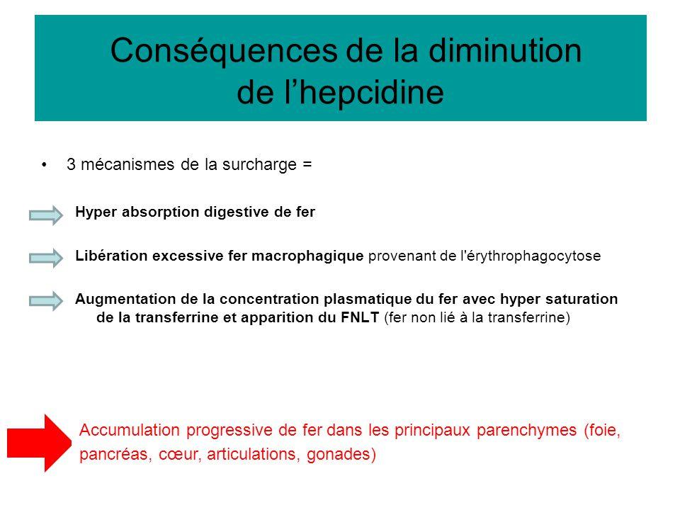 3 mécanismes de la surcharge = Hyper absorption digestive de fer Libération excessive fer macrophagique provenant de l'érythrophagocytose Augmentation