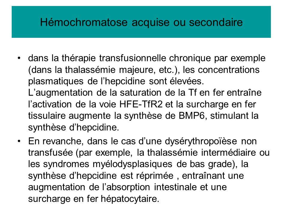 dans la thérapie transfusionnelle chronique par exemple (dans la thalassémie majeure, etc.), les concentrations plasmatiques de l'hepcidine sont élevé