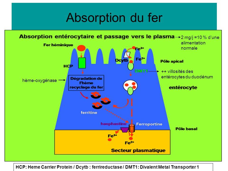 Absorption du fer 2 mg/j =10 % d'une alimentation normale hème-oxygénase ++ villosités des entérocytes du duodénum HCP: Heme Carrier Protein / Dcytb :
