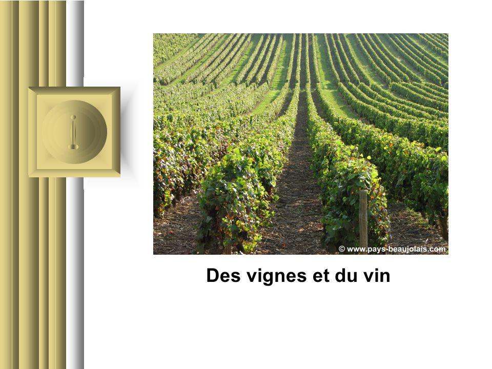 Des vignes et du vin