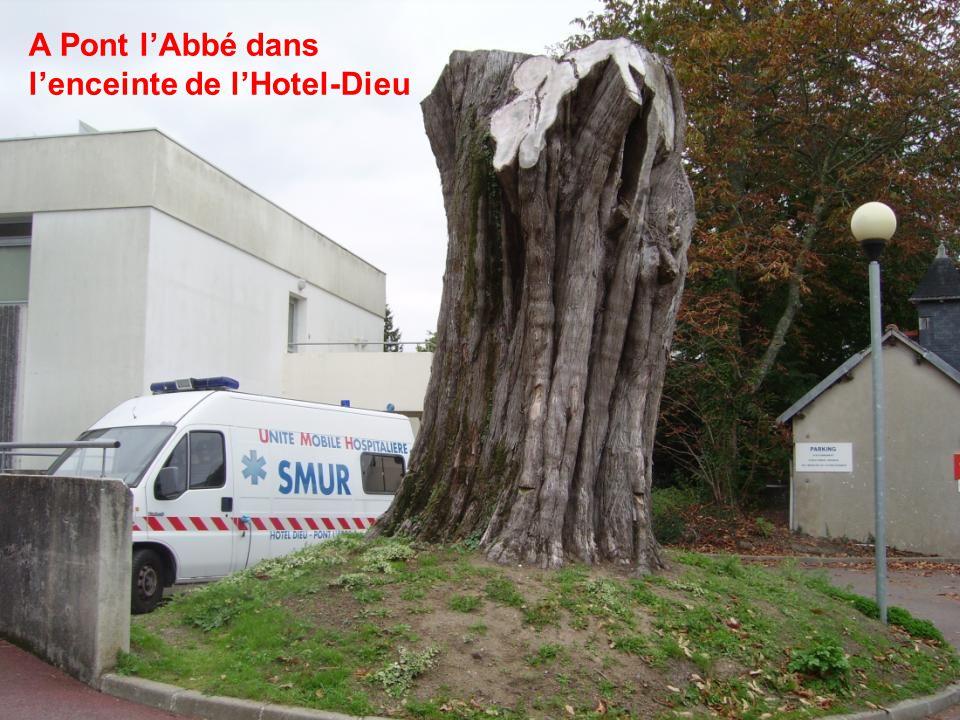 Réponse à l'énigme précédente Cet arbre n'a pas été abattu pour servir de sapin de Noël.