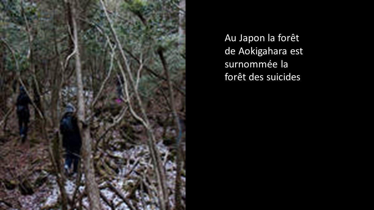 Au Japon la forêt de Aokigahara est surnommée la forêt des suicides