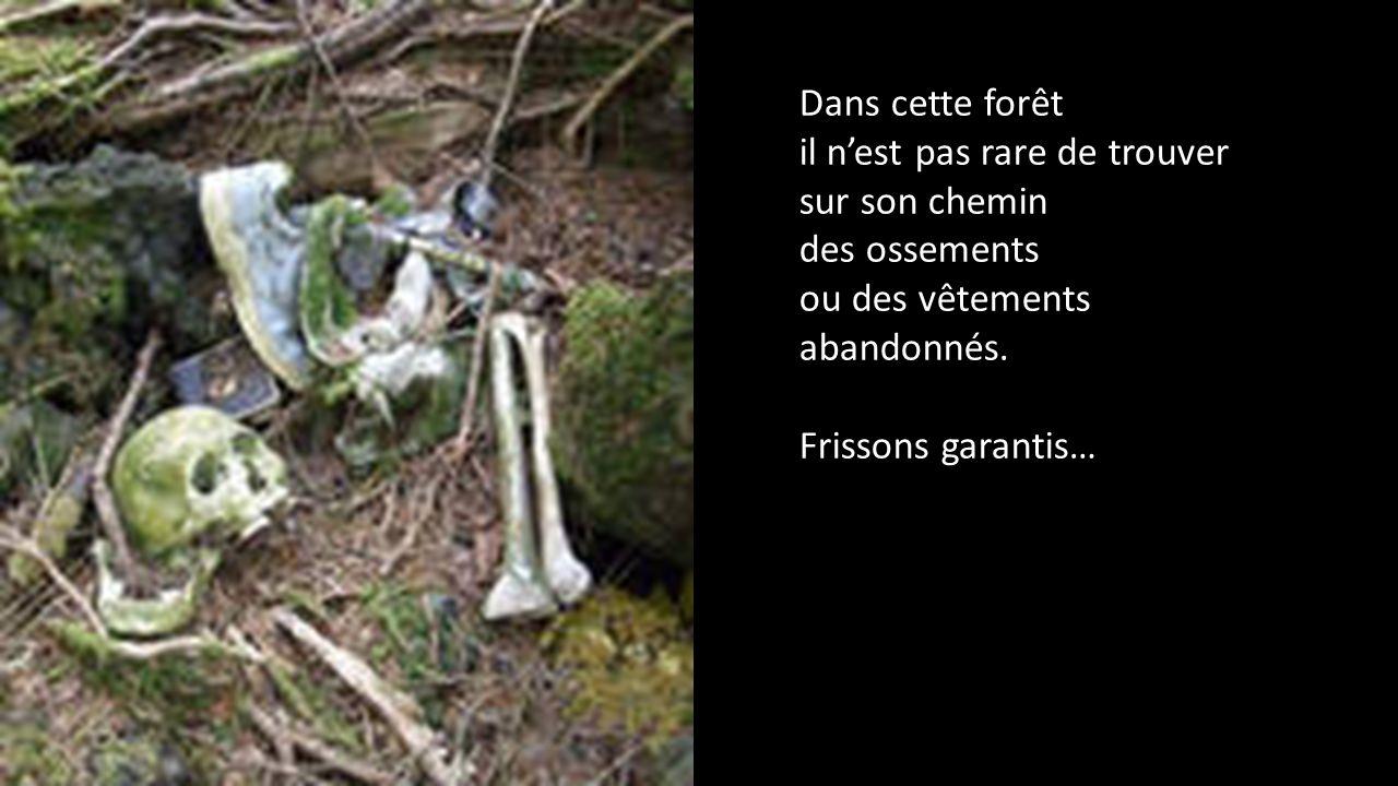 Dans cette forêt il n'est pas rare de trouver sur son chemin des ossements ou des vêtements abandonnés.