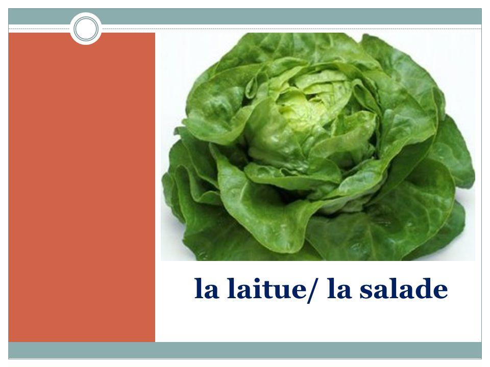 la laitue/ la salade