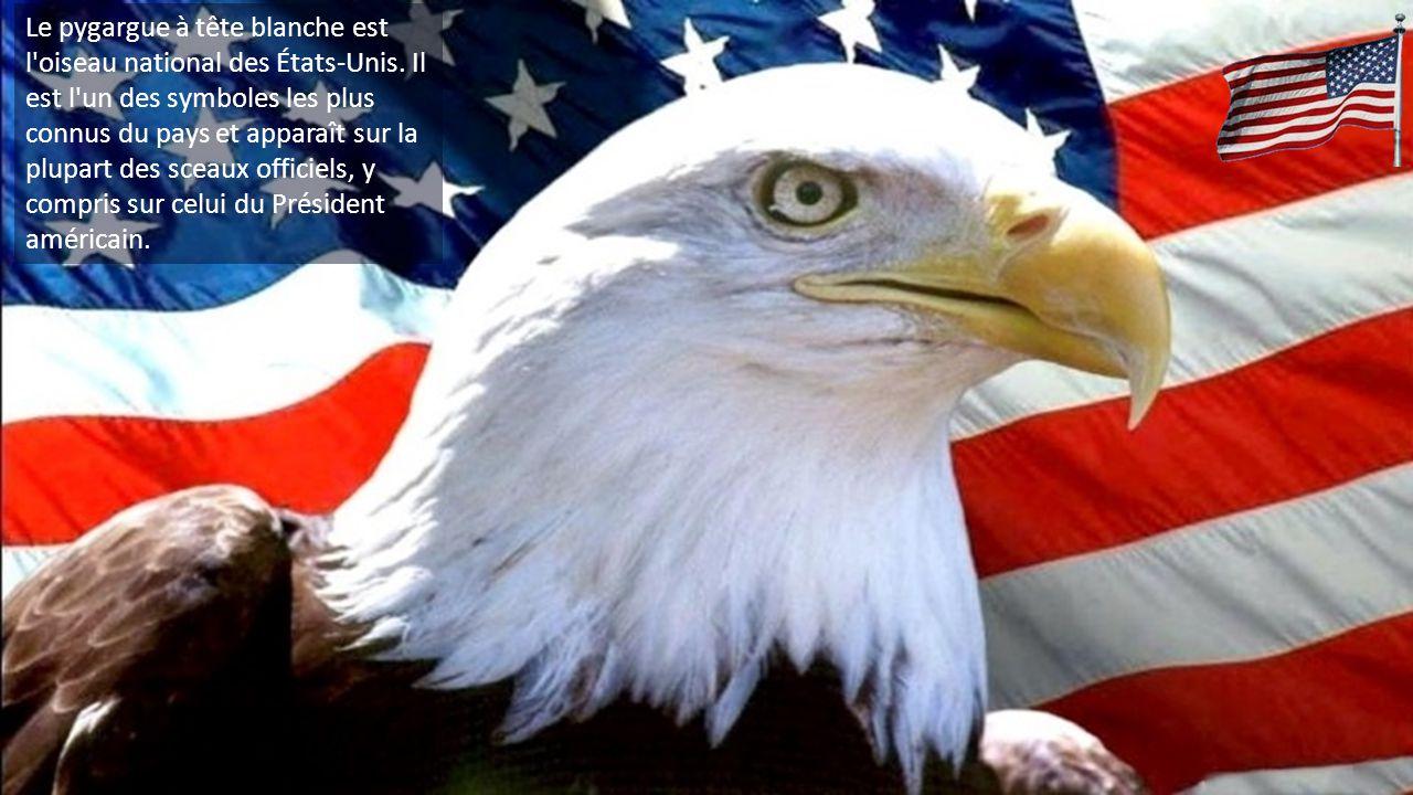 Le pygargue à tête blanche est l oiseau national des États-Unis.